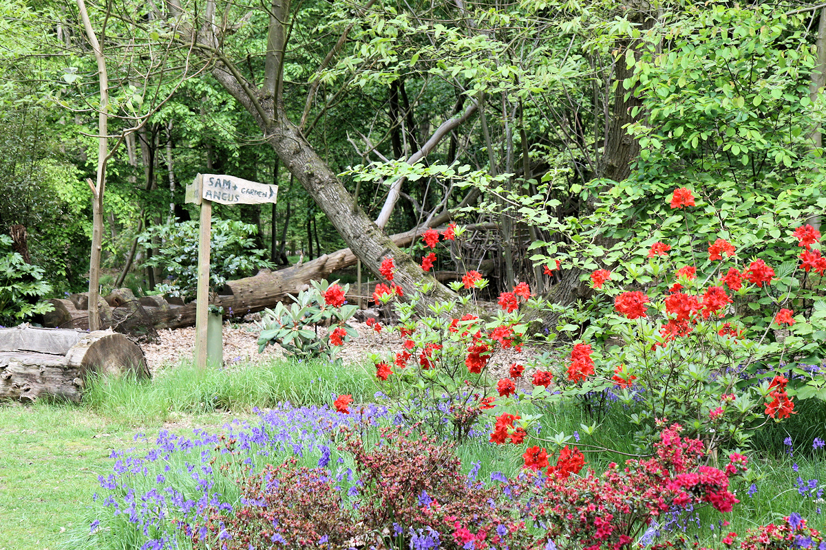 open gardens, garden centre, plant nursery, tea room in Colchester and Essex